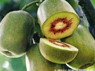 高血压饮食:苹果山楂猕猴桃可助高血压患者降血压