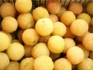买白杨梅苗到二都杨梅种植基地,品种纯正