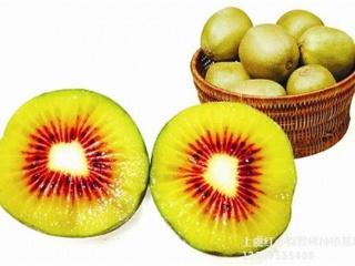 黄山红阳红心猕猴桃苗品种介绍与栽培方法
