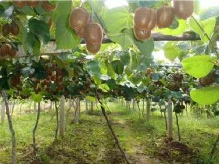 世界首个苹果猕猴桃基因功能大数据库在杨凌投建