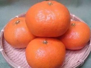 甘平柑橘苗一亩种几棵 甘平柑橘市场行情