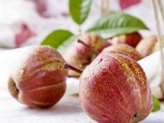 早酥红梨苗种植技术介绍