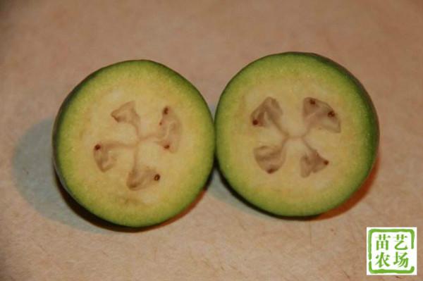 斐济果怎么吃?斐济果有什么营养价值和功效?[多图]图片4
