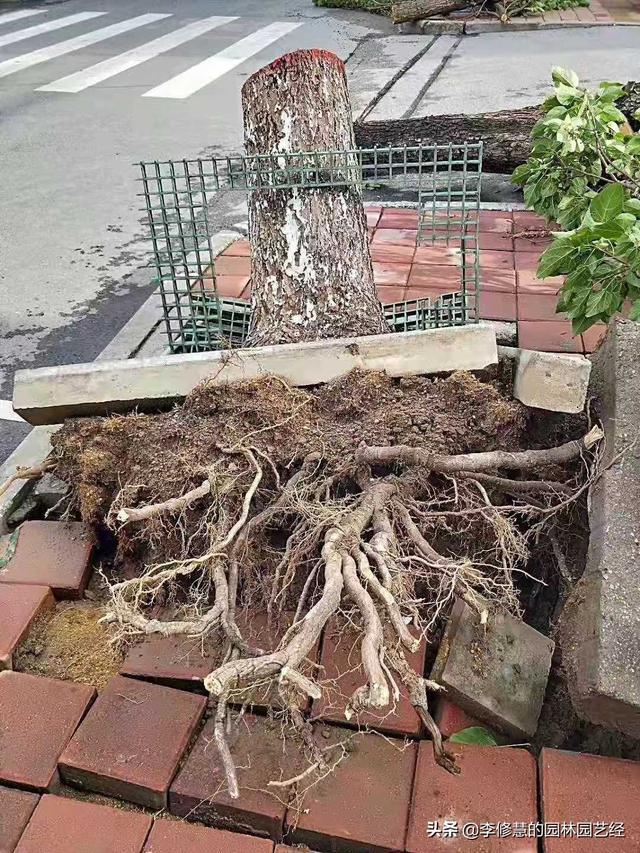 如何做好水涝后的绿化植物恢复工作?