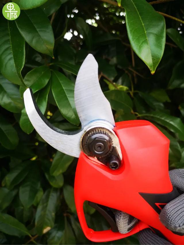 果宿助力园艺,让你园林剪枝效率提高8倍以上的神器赠你