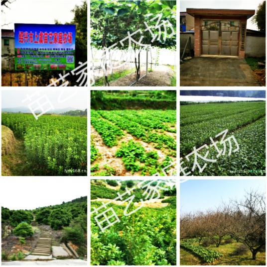 部分农场实景图