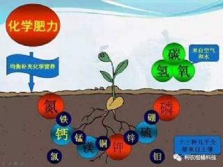 柑橘膨果、壮果很重要,肥要怎么施?施多少?卢老师告诉你