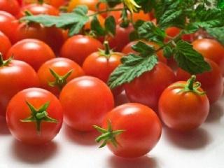 圣女果高产的种植方法