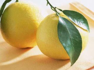 柚子-有关柚子的资料