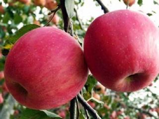苹果树施肥有几种方法