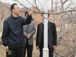 苹果树幼树后期管理和越冬防寒