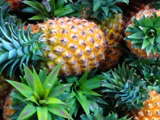 菠萝的营养价值 吃菠萝的好处