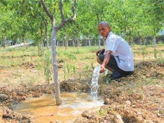 枣树施肥时间 枣树施肥管理技术