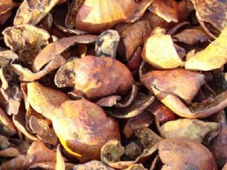 石榴皮的药用价值与功效
