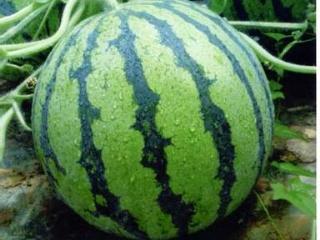 吃西瓜有什么好处-西瓜的营养价值