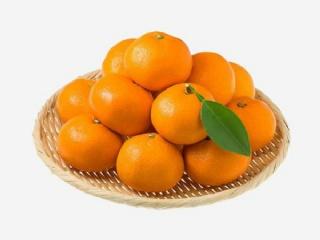兴津58阿斯蜜柑橘苗明日见柑桔苗品种来源及种植技术