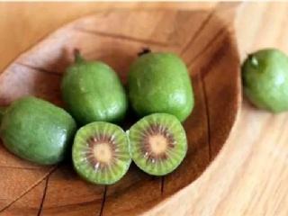 软枣猕猴桃果树苗的种植前景