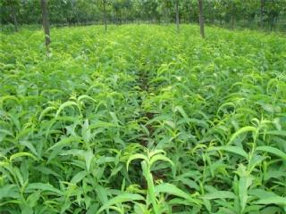 丽水果苗场可批发正宗果树苗,桃苗,柑橘苗等适合南方种植的果苗