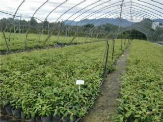 南方适合种植哪些果苗品种,选择哪个果苗场购买好