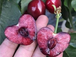 回顾2019年种植效果好的果苗品种介绍