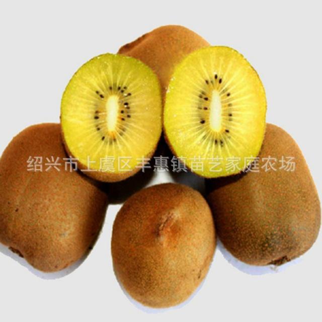 黄金果猕猴桃苗木
